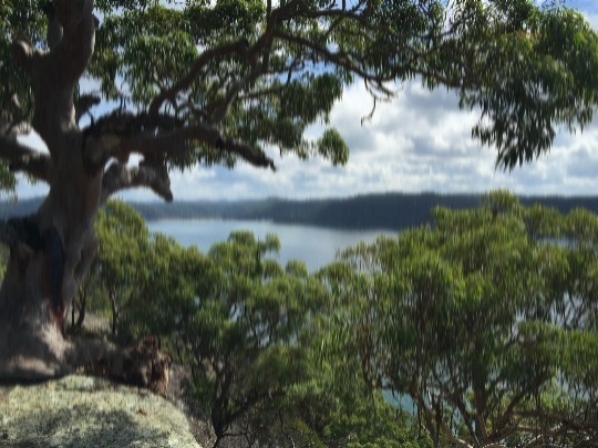 Bush walk in Ku-ring-gai National Park. See boundless water views & amazing natural scenery, plus visit Aboriginal sites.